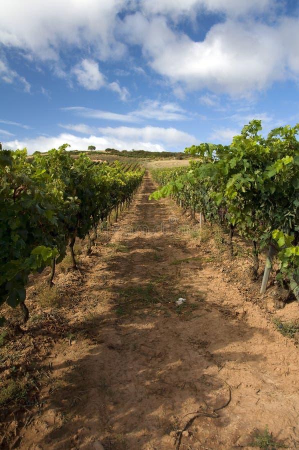 Wineyard en el La Rioja imagen de archivo libre de regalías