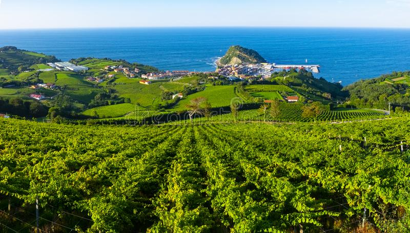 Wineyard Euskadi landscape sea royalty free stock photography