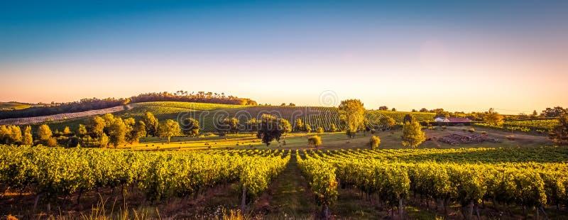 Wineyard Frankrike för solnedgånglandskapbordeaux royaltyfri bild
