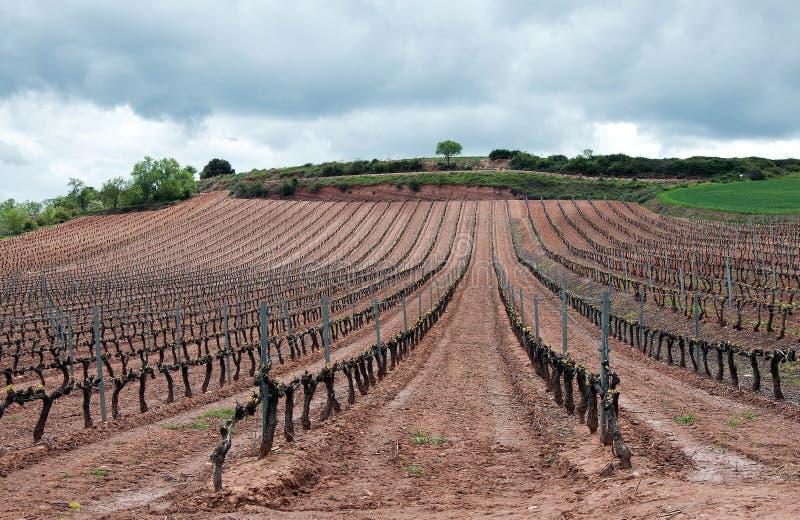 Wineyard in La Rioja in giorno nuvoloso fotografia stock