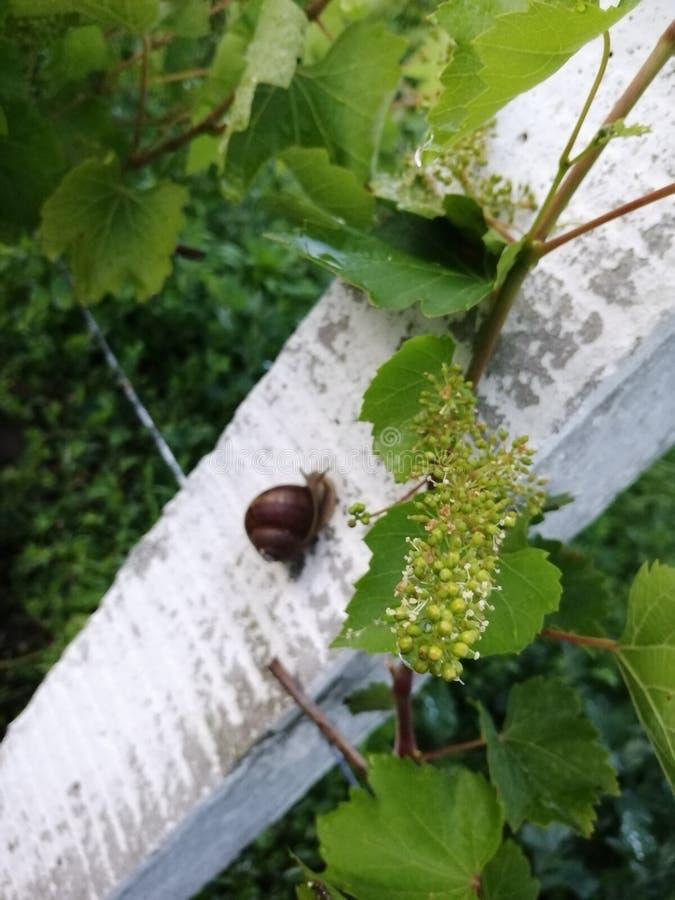 Wineyard fotografia stock