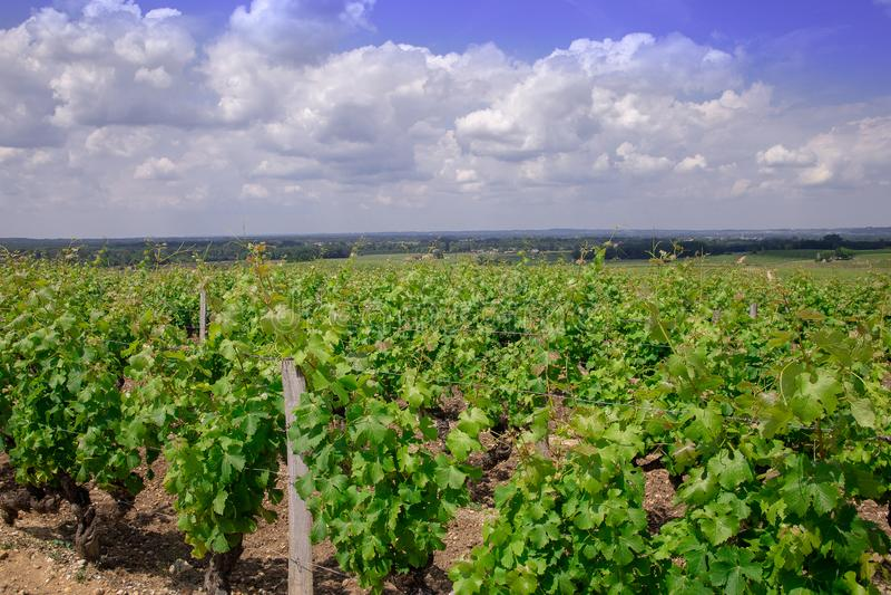 Wineyard natureza de france do Bordéus da paisagem, Europa imagem de stock royalty free