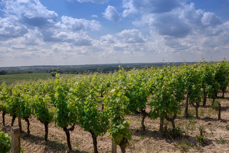 Wineyard natureza de france do Bordéus da paisagem, Europa imagem de stock