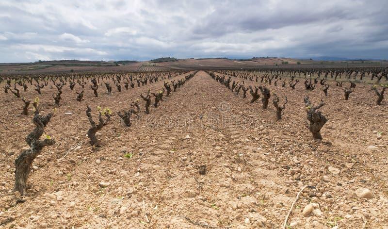 Wineyard no La Rioja, Spain foto de stock