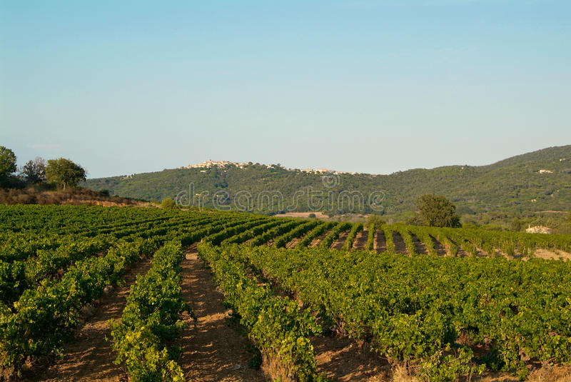 Wineyard in Provence stock photography