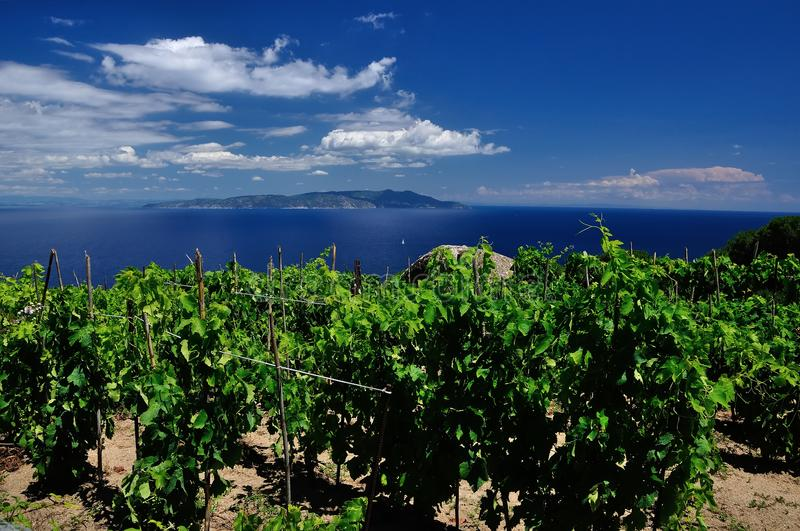 Wineyard seaview with sky, Giglio Island, Tuscany, Italy stock photos