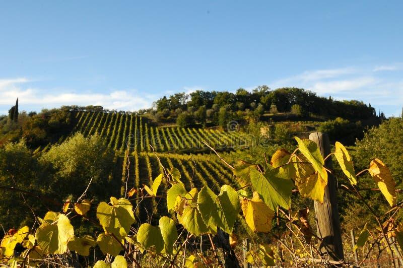 Wineyards在托斯卡纳, Chianti,意大利 库存图片
