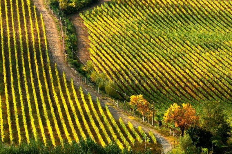 Wineyards在托斯卡纳, Chianti,意大利 图库摄影