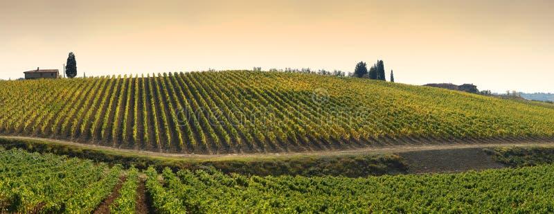 Wineyards在托斯卡纳, Chianti,意大利 免版税库存照片