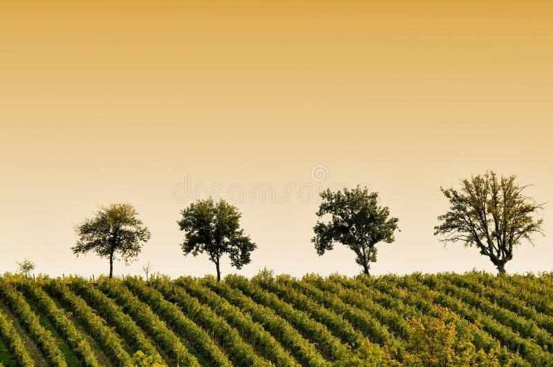 Wineyards в Тоскане, Chianti, Италии стоковое фото rf