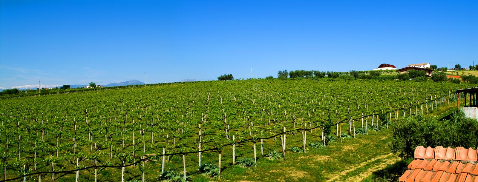 Wineyards foto de stock royalty free