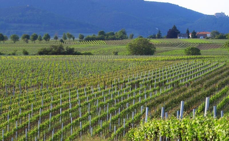 Download Wineyards fotografia stock. Immagine di paese, farmland - 213922