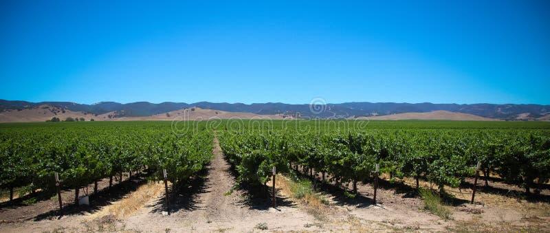 Wineyards obrazy royalty free