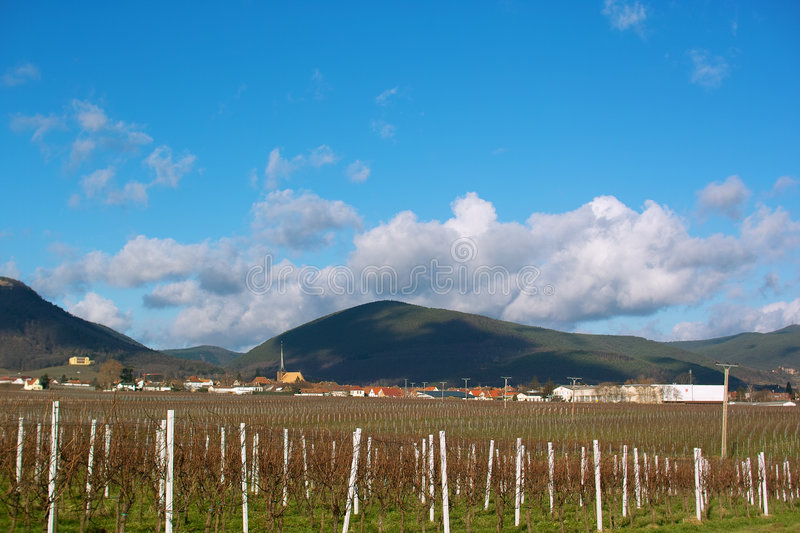Download Wineyards in autumn stock photo. Image of cloud, green - 7643038