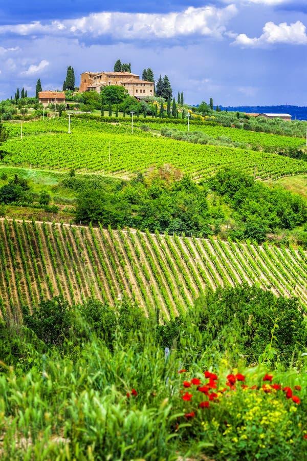 Wineyards av Tuscany, Italien royaltyfri foto