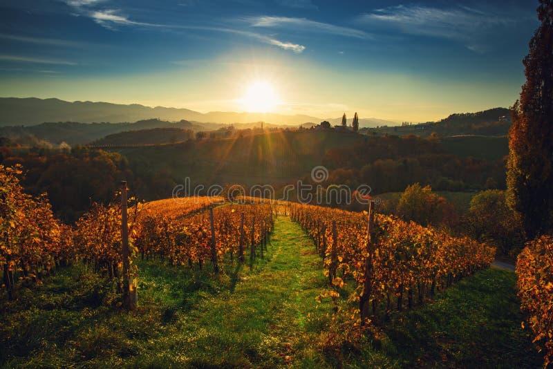 Wineyards fält, solnedgångsikt från Spicnik nära Maribor royaltyfria bilder