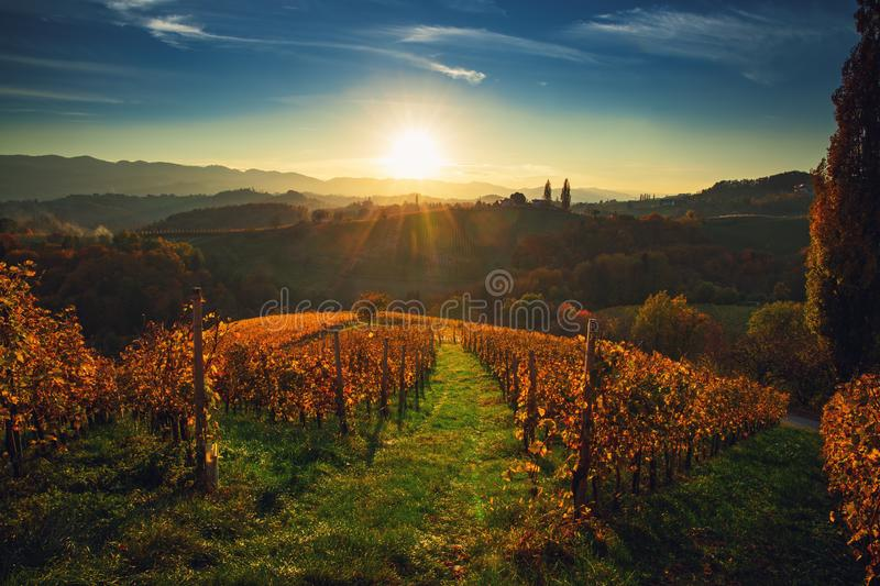 Wineyards fields, sunset view from Spicnik near Maribor.  royalty free stock images