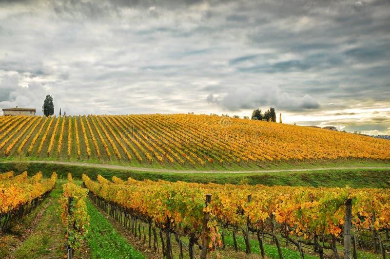 Wineyards i höst i Tuscany, Chianti, Italien arkivbild