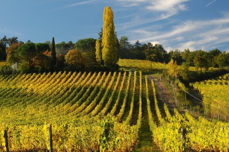 Wineyards i Tuscany, Chianti, Italien arkivfoton