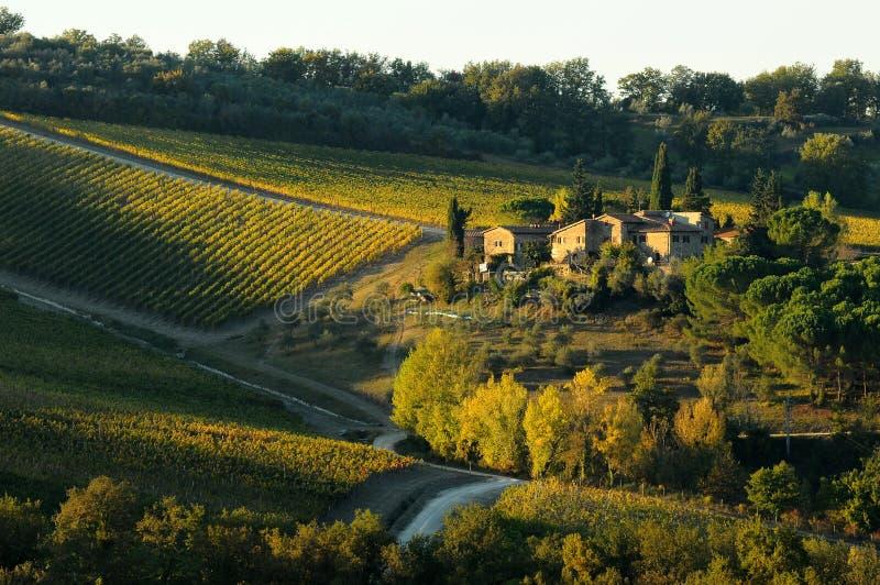 Wineyards i Tuscany i hösten, Chianti, Italien royaltyfria bilder