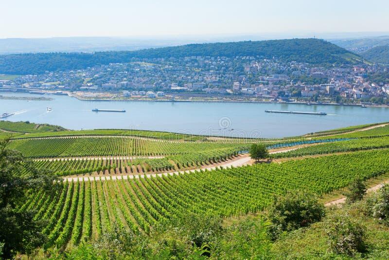 Wineyards in Rudesheim am Rhein stock photos