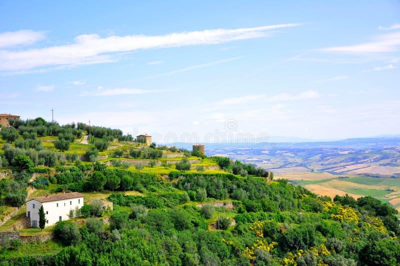 Wineyards in Toskana, Italien stockbilder
