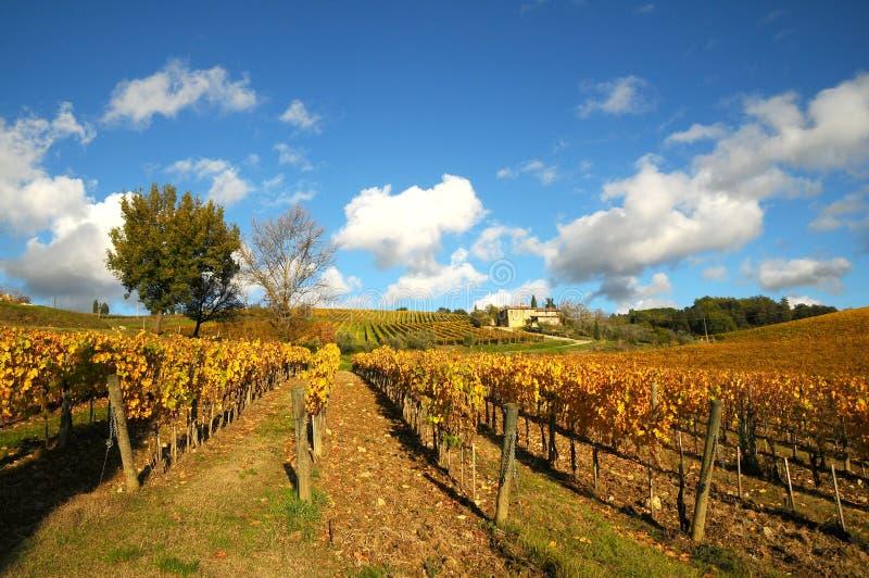 Wineyards in Tuscany, Chianti, Italy royalty free stock photo