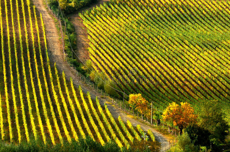 Wineyards in Tuscany, Chianti, Italy stock photography