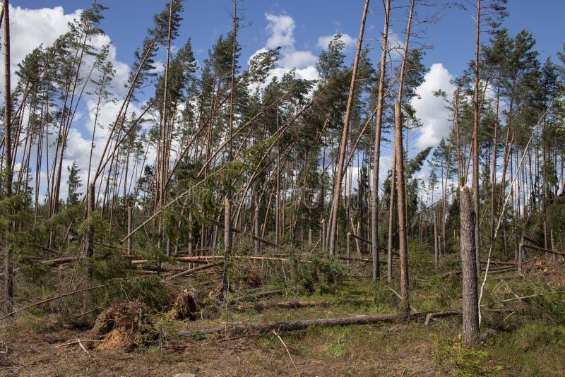 Winfall в лесе стоковое изображение rf