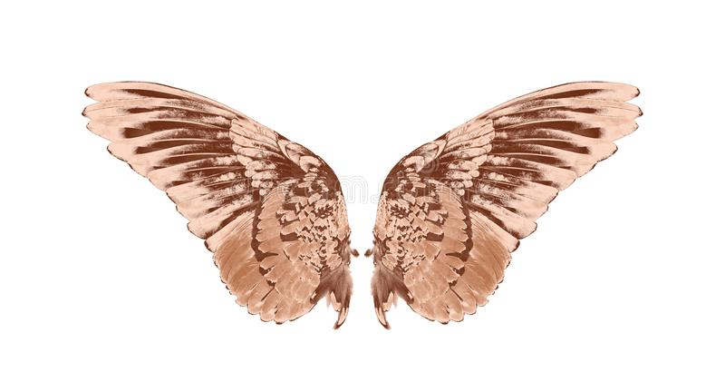 Wing of birds on white background stock image