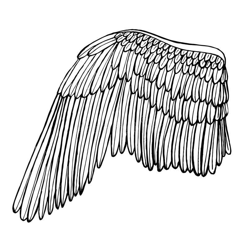 Wing Hand Draw Sketch. Vector vector illustration