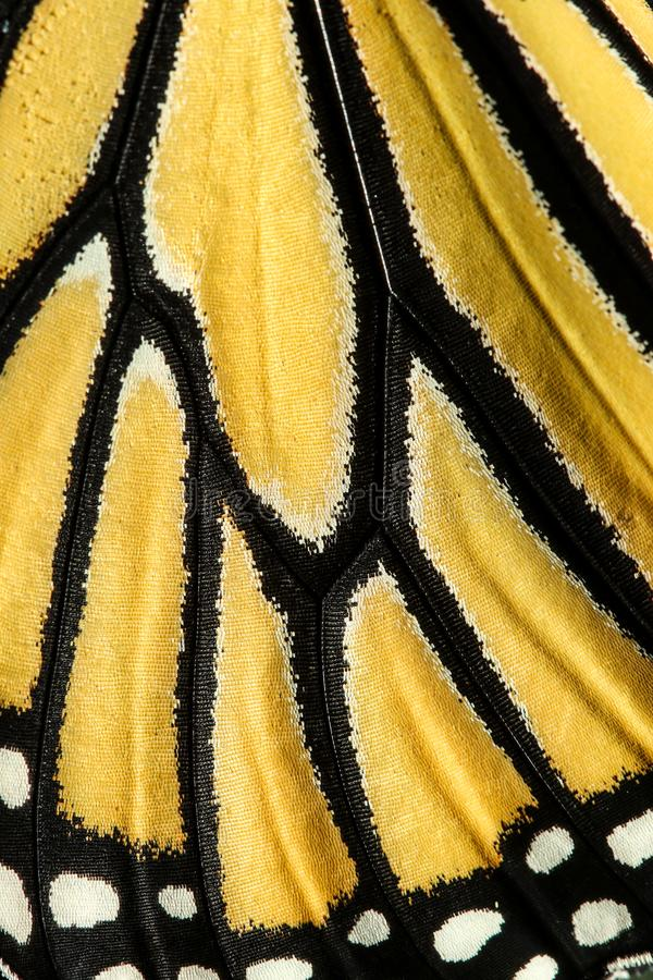 Wing pattern of monarch butterfly stock image