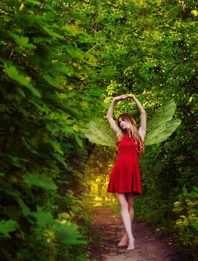 The winged fairy walks through the forest. royalty free stock photo