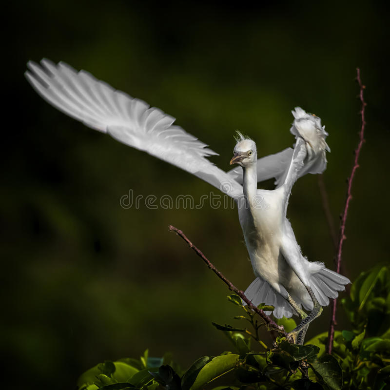 Winged stock photography