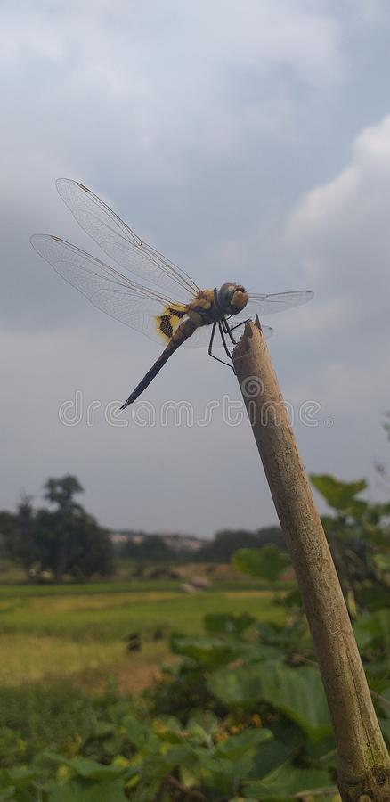 WINGER BUZZER. MY WINGS, natural, dragonfly, amall, small, space, tiny, trust, fast royalty free stock image