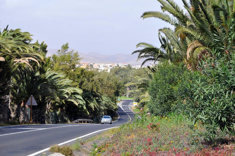 The winging road trough the palmtrees. royalty free stock photo