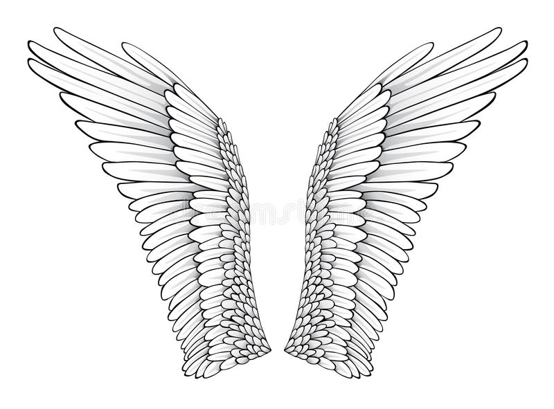 Download Wings stock vector. Image of illustration, kindness, beautiful - 16695267