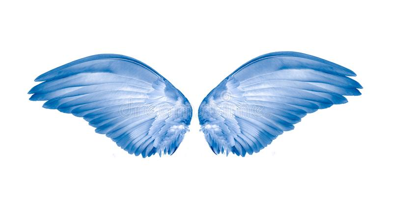 Wings of bird on white background royalty free stock photos
