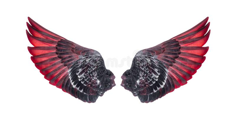 Wings of birds isolated on white background stock photo