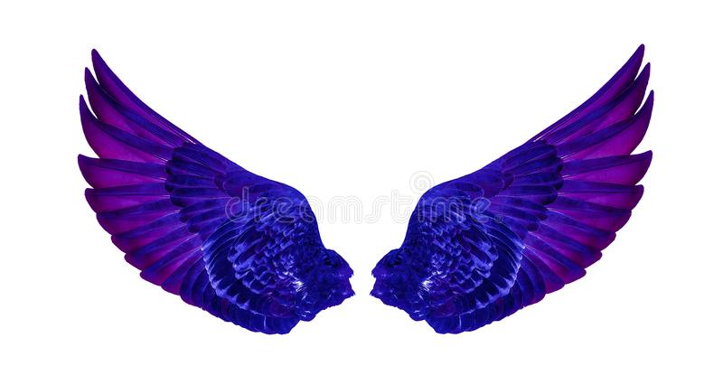 Wings of birds isolated on white background royalty free stock image