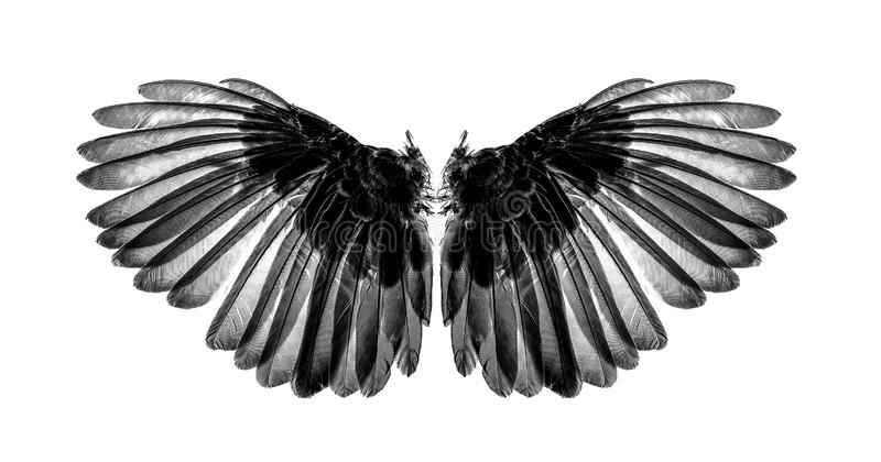 Wings of birds on white background stock images