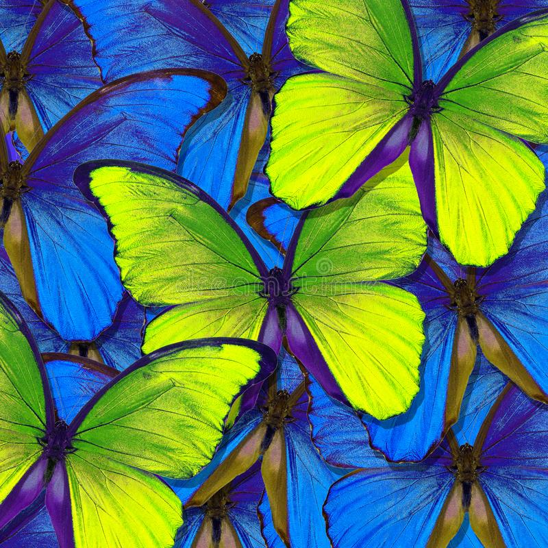 Wings of a butterfly Morpho. Flight of bright orange and blue butterflies abstract background. stock image