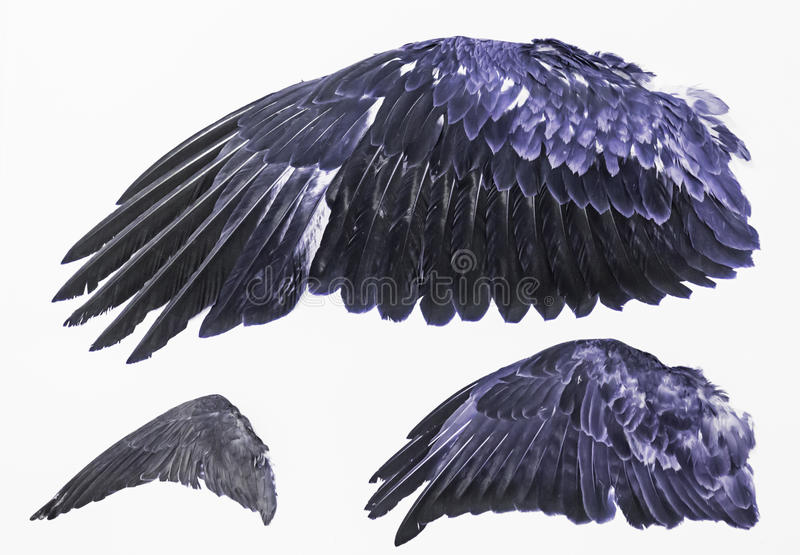 Wings of Eagles stock photography