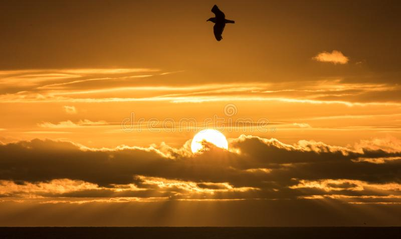 The Wings of Freedom flying over the Majestic Sun about to set into the Tasman Sea. On the West Coast of the South Island of New Zealand, got this great shot at stock image