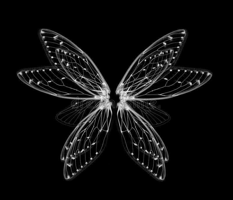 Wings of Insect cicada on white bacground royalty free stock photo