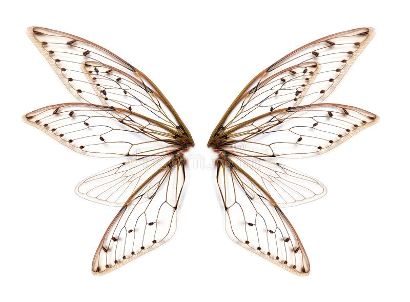 Wings of Insect cicada on white bacground stock image