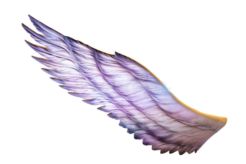 Wings stock photography