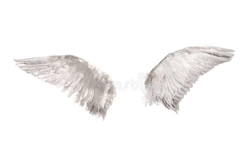 Wings over white royalty free stock images