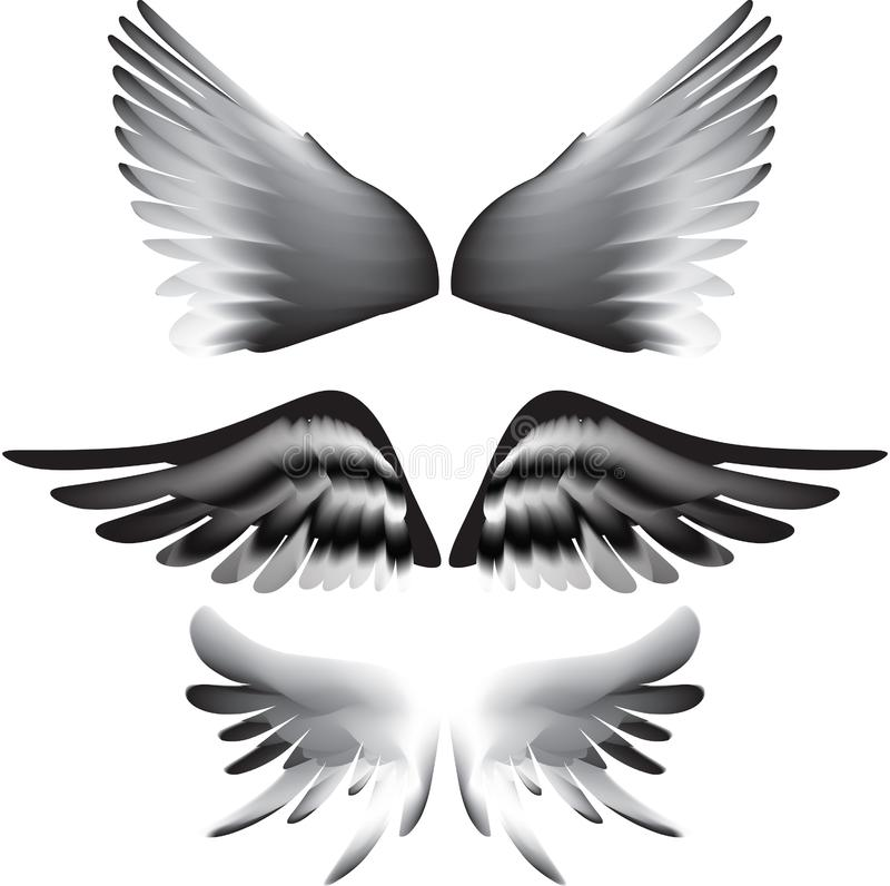 Wings silhouette stock image