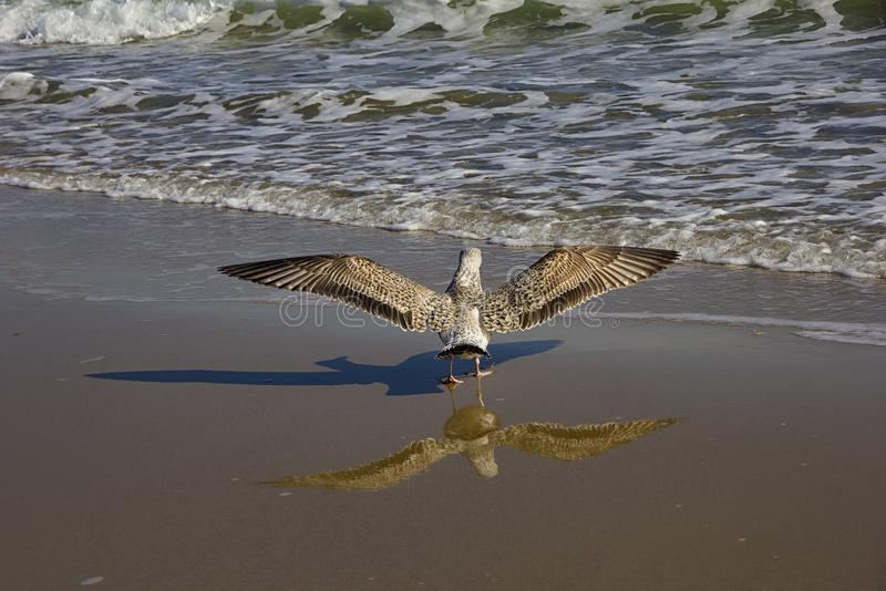 wingspan immagine stock